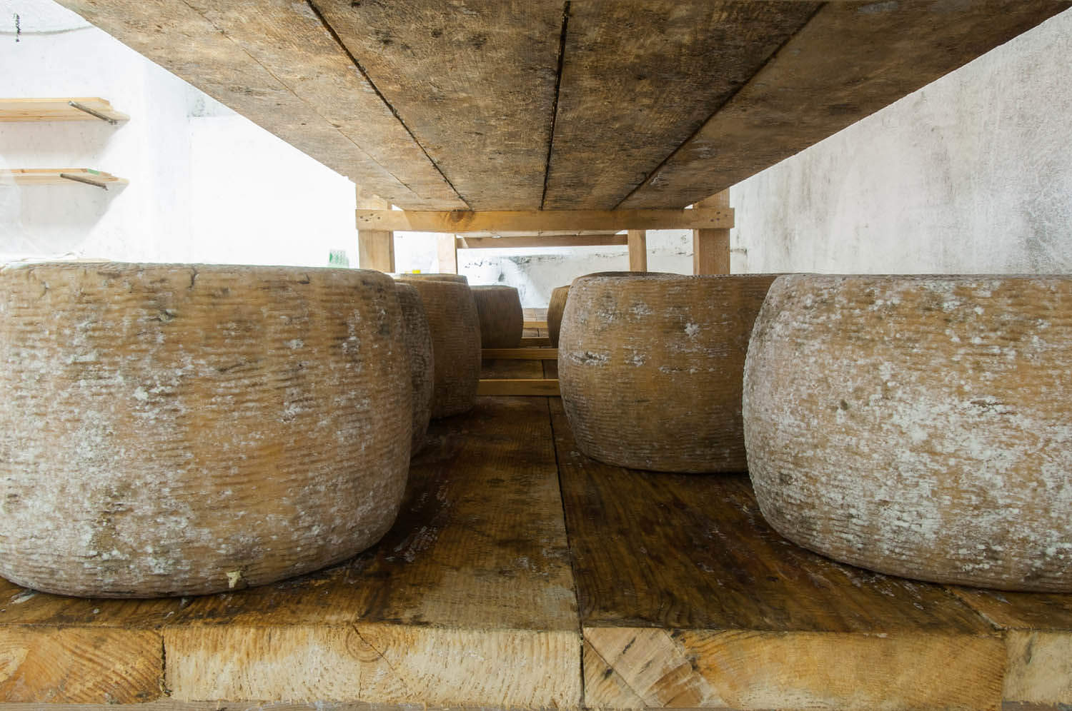 Cheese in aging cave