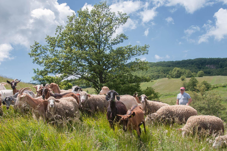 Avigliano high altitude pastures
